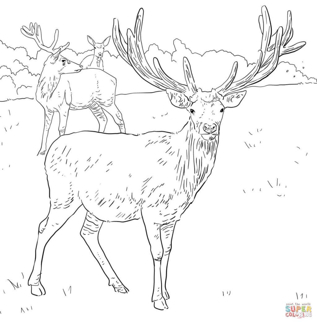 1024x1045 Western European Red Deer Coloring Page Free Printable Coloring