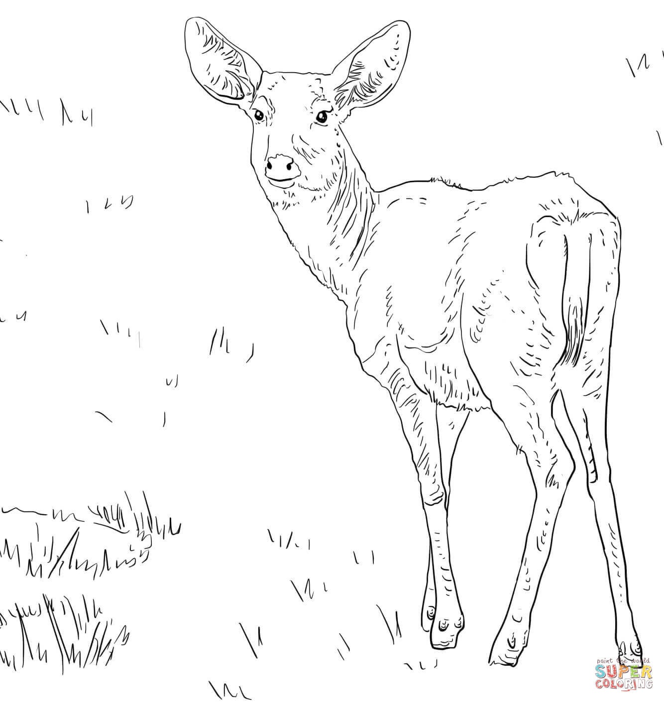 1334x1410 White Tail Deer Coloring Page Free Printable Pages Beautiful