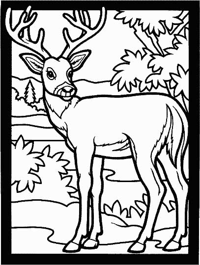 407x540 Deer Coloring Page For Kids