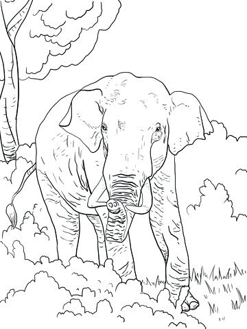 360x480 Elephant Coloring Page Free Printable Coloring Pages Indian
