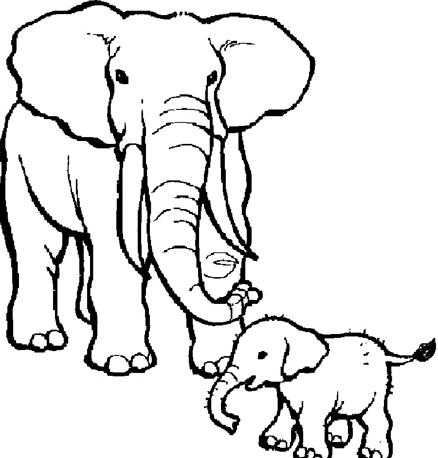 900x942 Elephant Coloring Page Circus Pages Download Big With Two Coloring