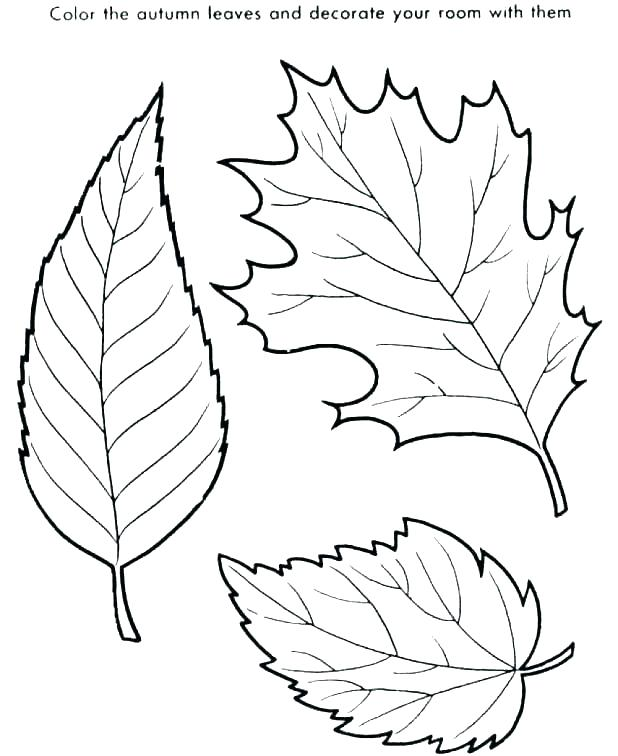 618x756 Leaf Coloring Page Coloring Ideas Pro