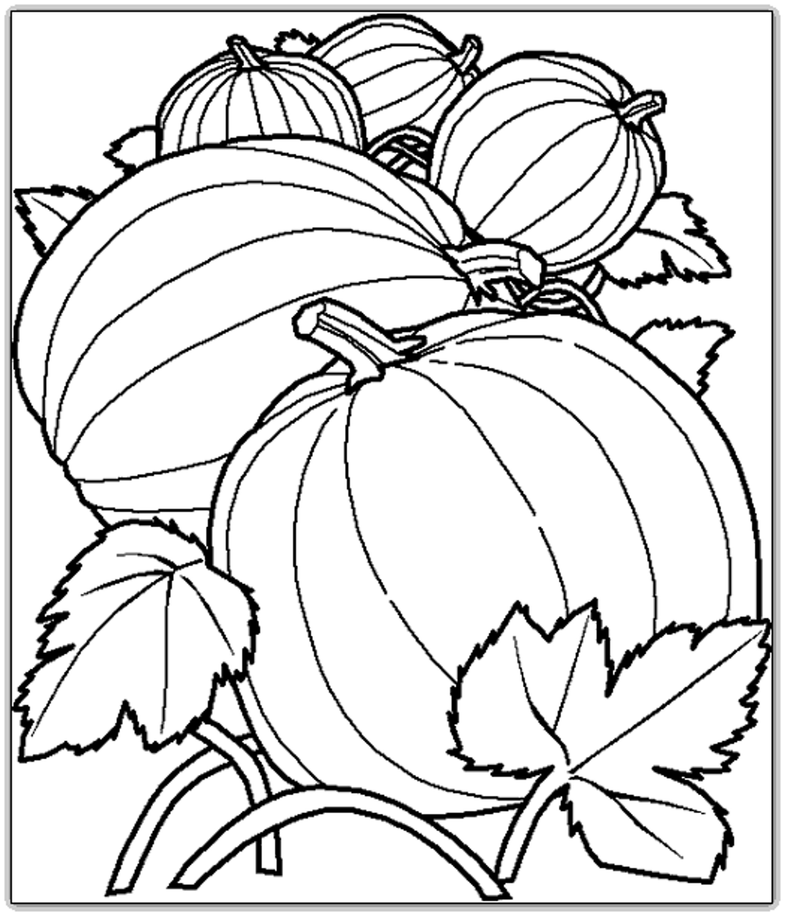Free Printable Fall Harvest Coloring Pages At Getdrawings Com Free