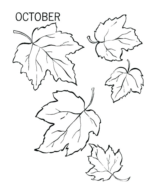 600x734 Fall Leaves Coloring Pages Printable Free Printable Fall Leaf