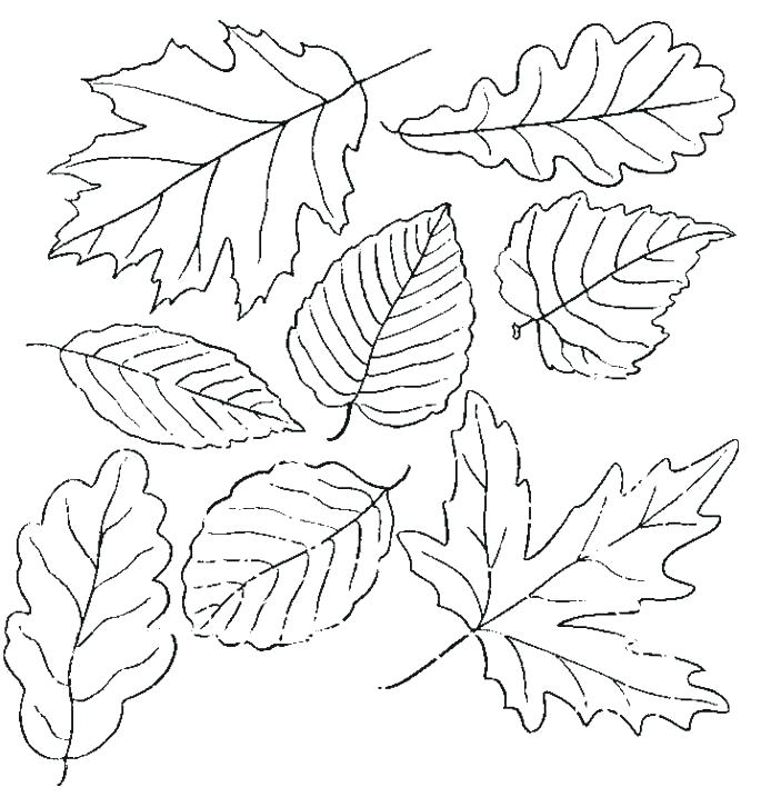 Free Printable Fall Leaves Coloring Pages At Getdrawings Com