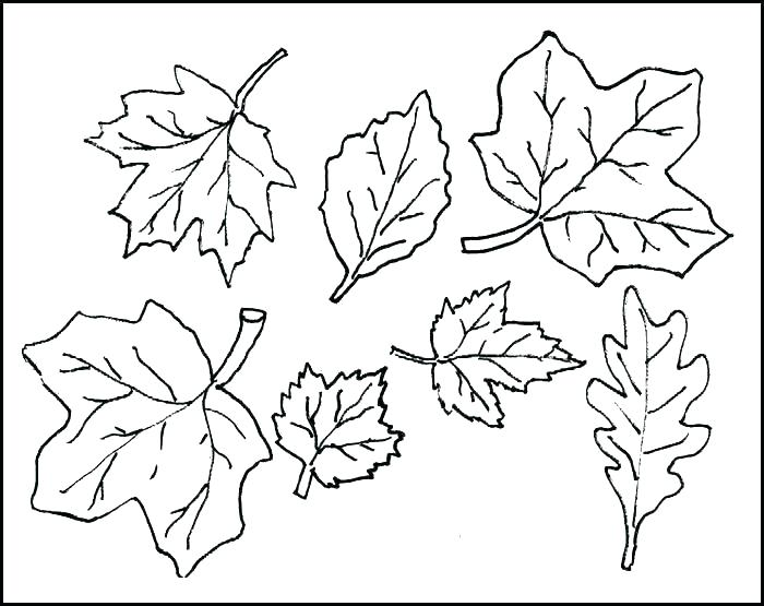 700x555 Free Printable Leaf Colouring Pages