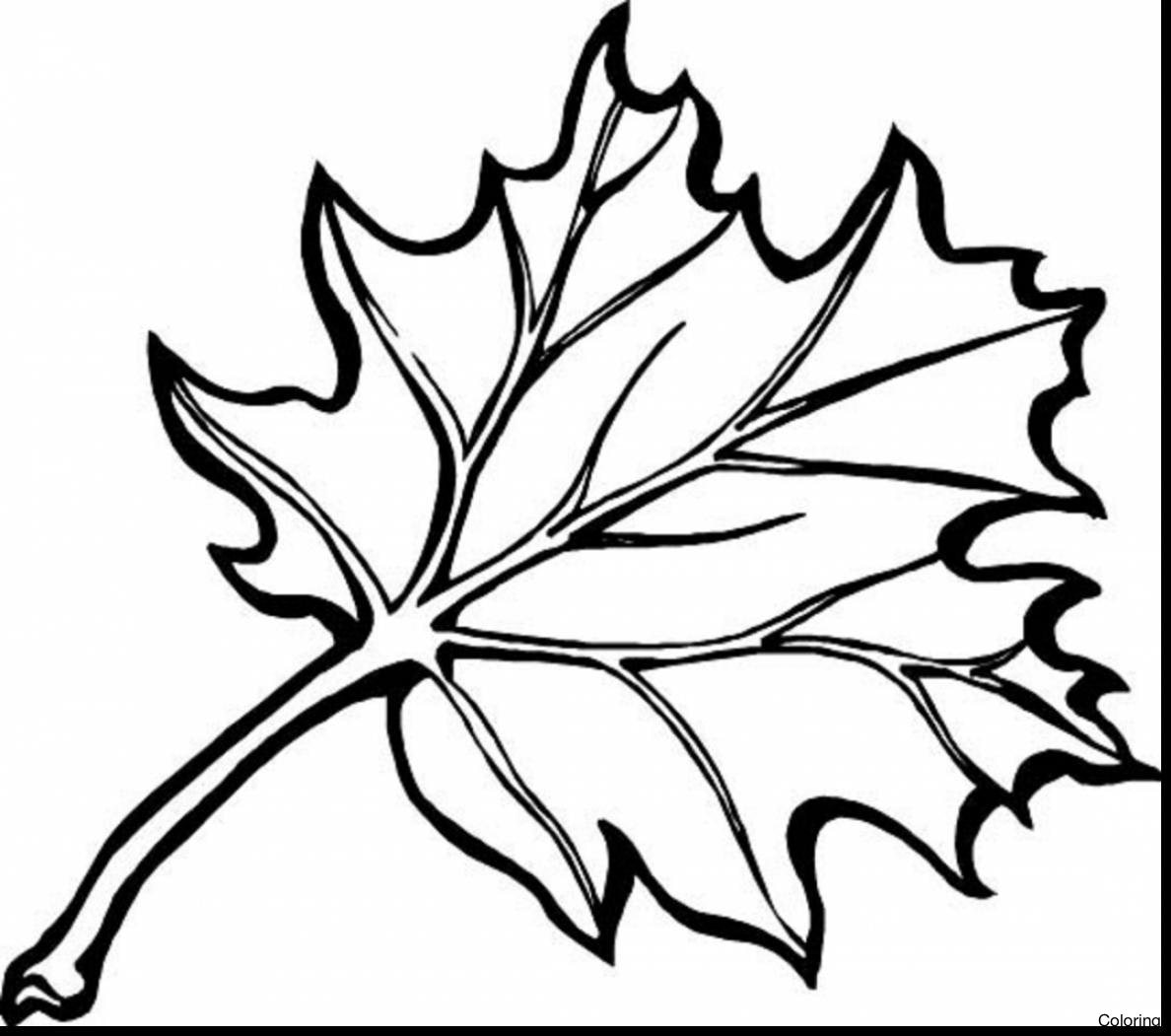 1188x1051 Beautiful Pumpkin And Leaves Coloring Pages Fall Free Printable