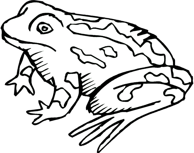 666x525 Free Frog Coloring Pages