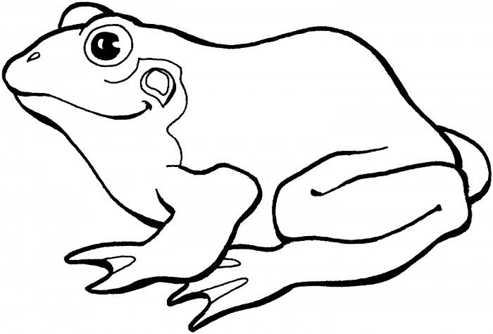700x474 Frog Coloring Pages