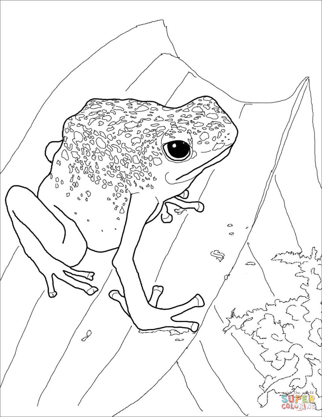 1098x1421 Blue Poison Dart Frog Coloring Page Free Printable Pages With Acpra