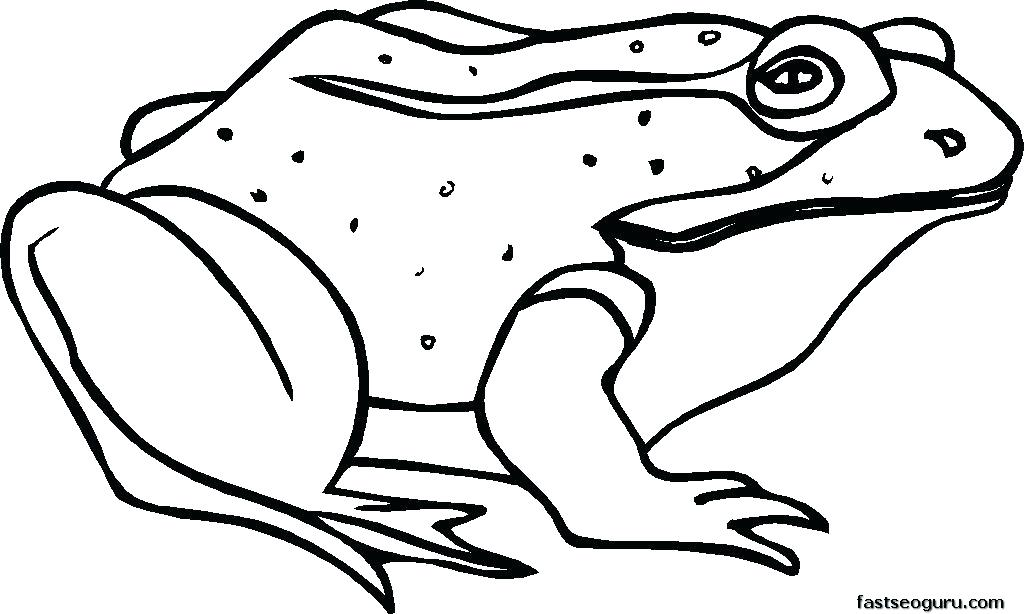 1024x614 Frog Coloring Pages Free Frog Coloring Pages Printable Many