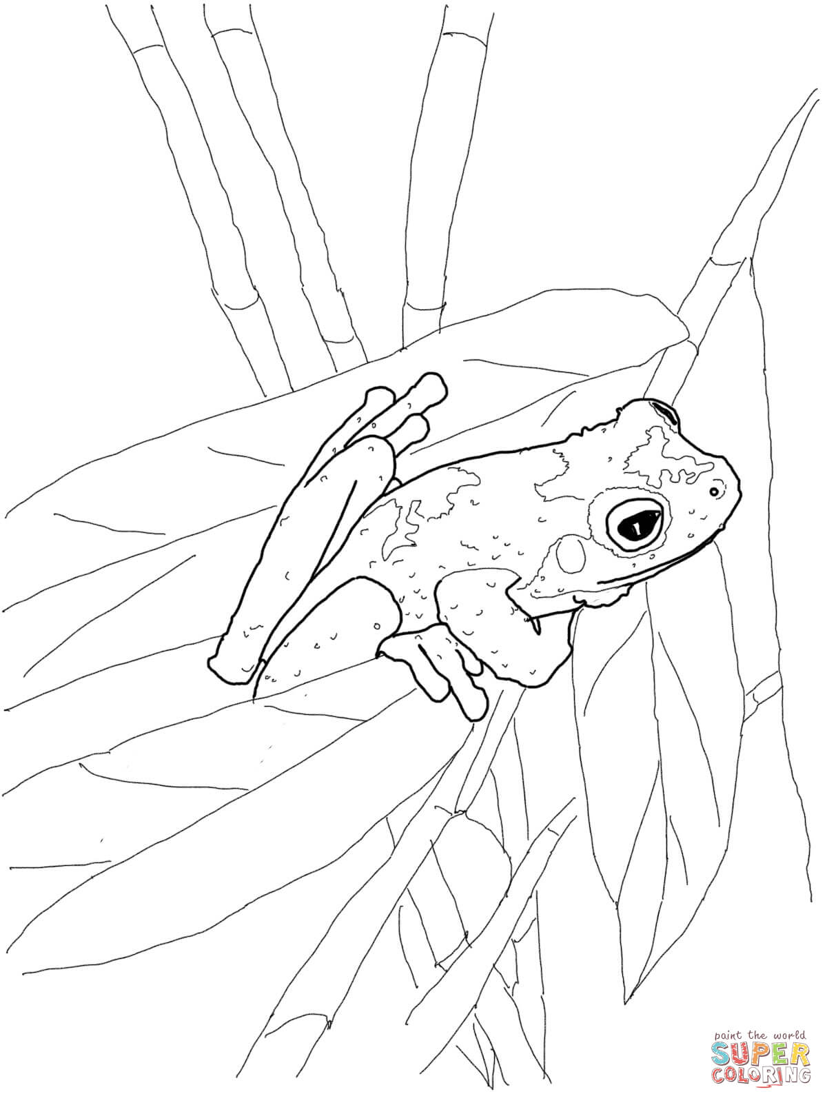 1200x1600 Red Eyed Tree Frog Clipart Coloring Page