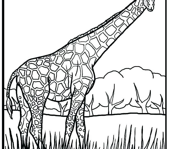 Free Printable Giraffe Coloring Pages At Getdrawings Com