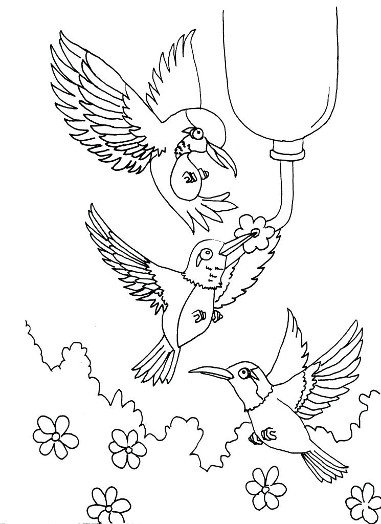 745x1024 Hummingbird Coloring Page Stock Vector Hummingbird Coloring Page