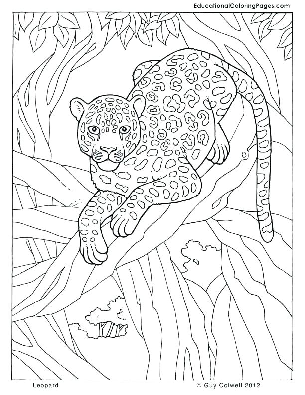 612x792 Jungle Animals Coloring Pages Jungle Coloring Page Leopard Jungle