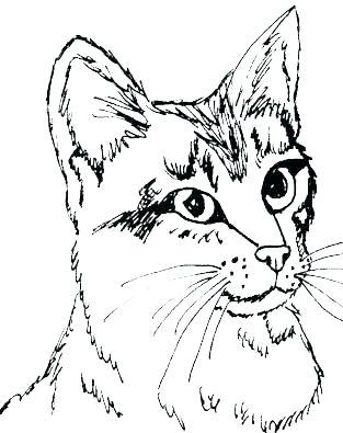 313x395 Kitten Coloring Sheets