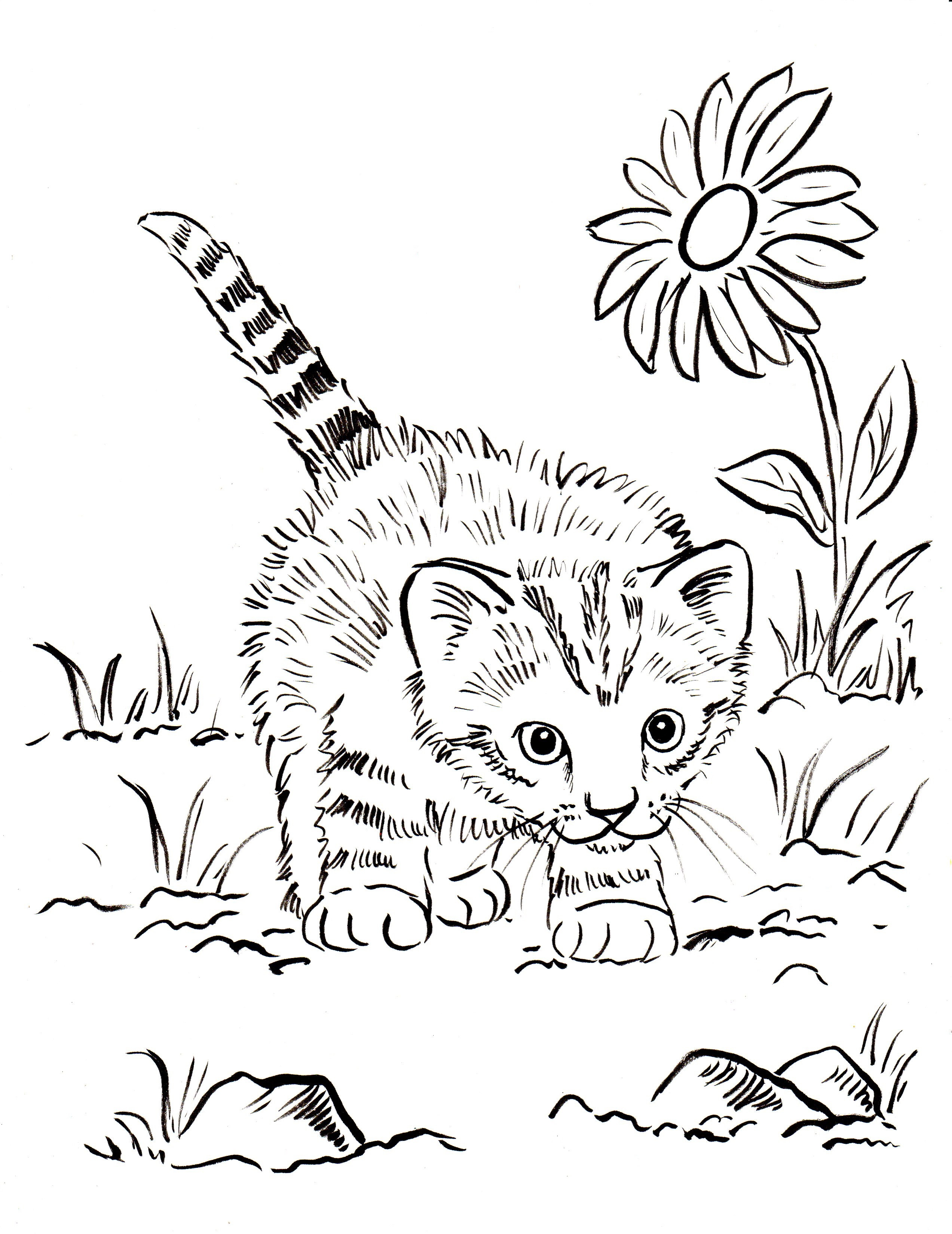 2545x3300 Cute Kitten Coloring Page Free Printable Pages Arresting