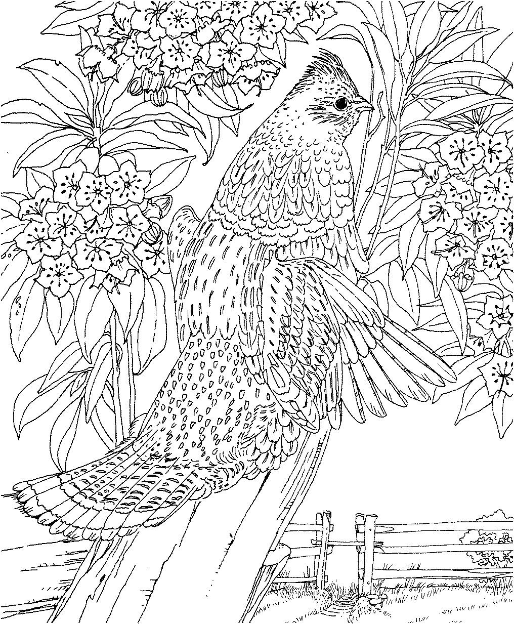 1016x1233 Printable Weeping Willow Tree Coloring Page