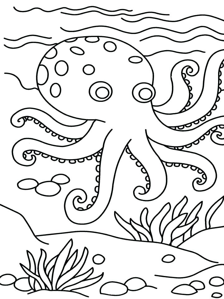 720x960 Colouring Pictures For Kids Free Printable Octopus Coloring Pages