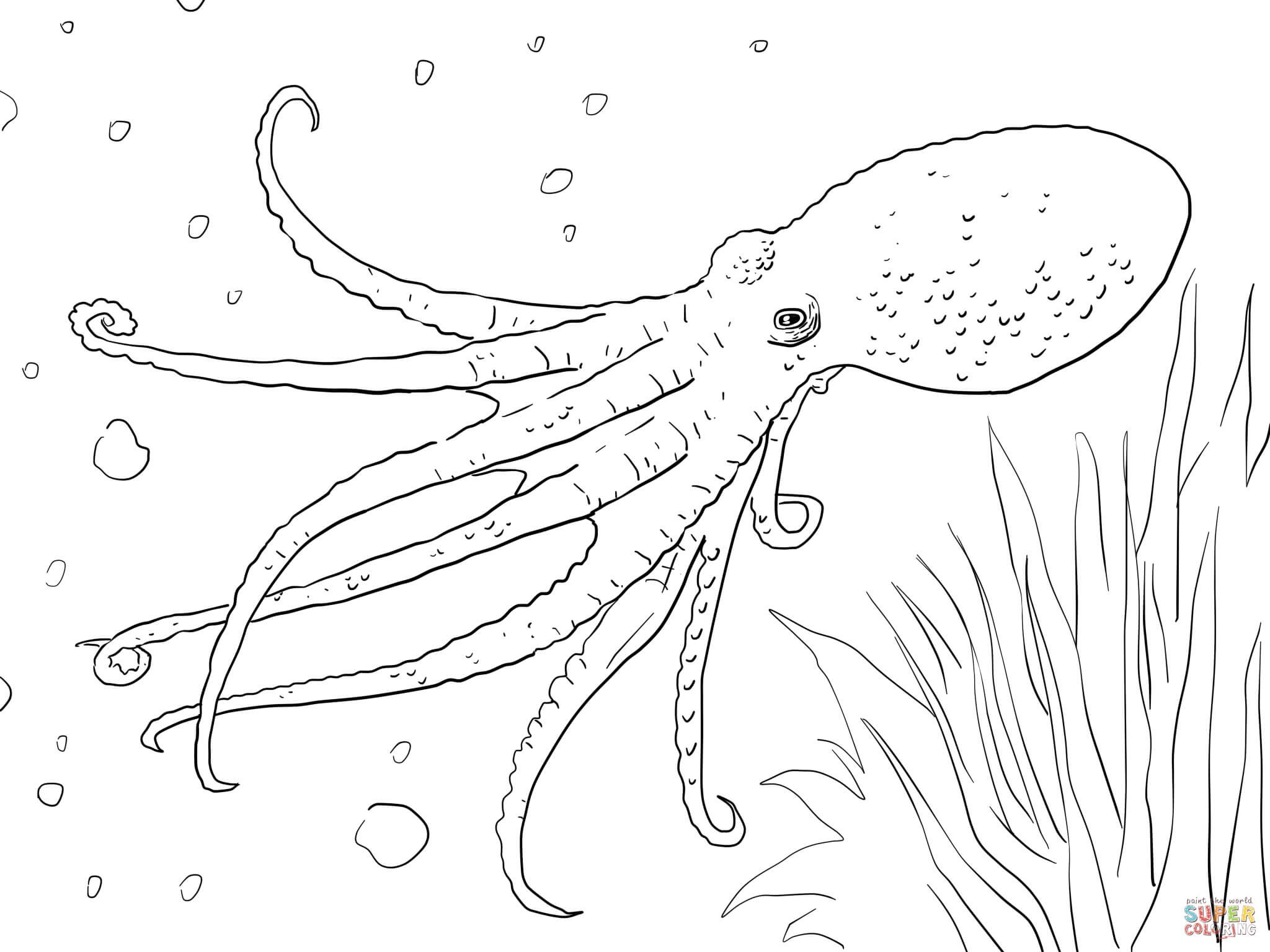 2048x1536 Printable Octopus Coloring Pages Cartoon Free Animals For Adults