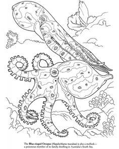 236x294 Sea Animals Coloring Pages Free Sea Life Animals Coloring Pages
