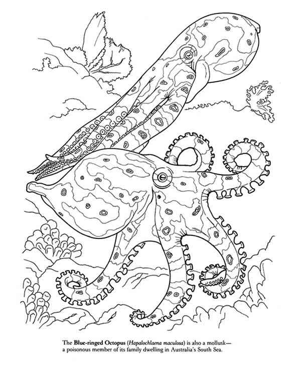 600x781 Blue Octopus Coloring Page