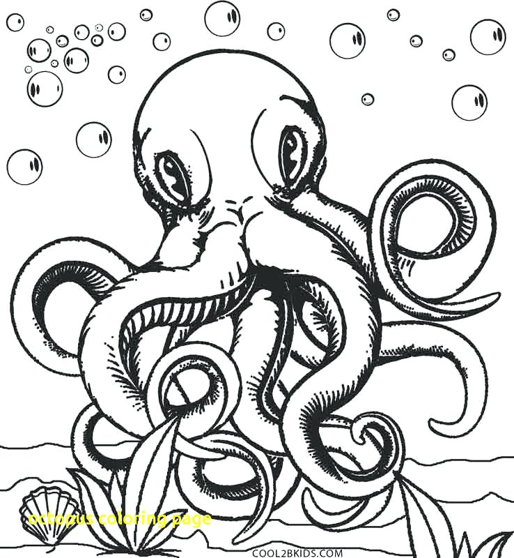 738x800 Coloring Page Octopus Octopus Coloring Page With Printable Octopus
