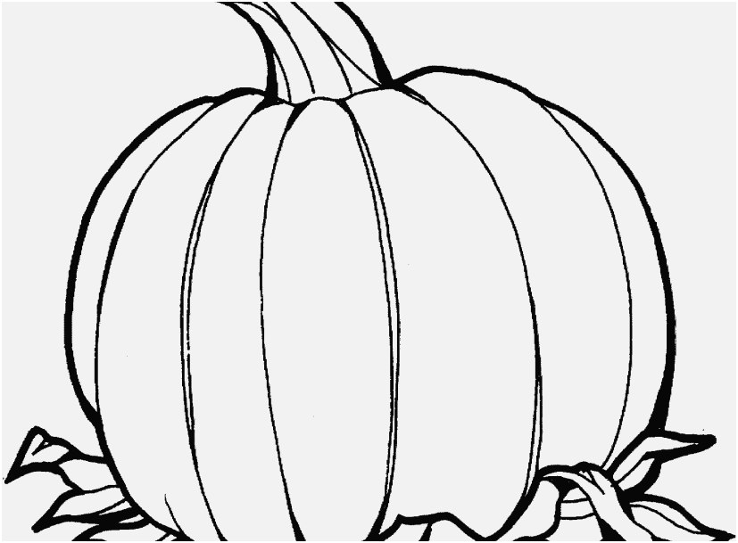 827x609 The Right Portraits Pumpkin Coloring Sheets Delightful