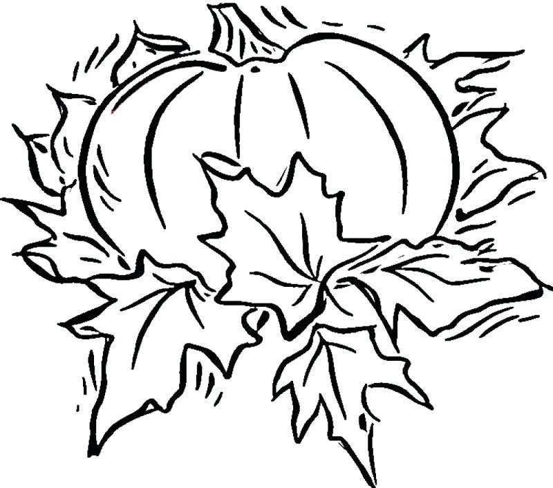 800x706 Pumpkin Coloring Pages For Kids Devon Creamteas