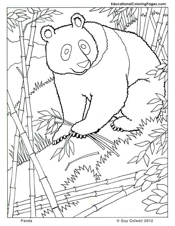 Free Printable Realistic Animal Coloring Pages At Getdrawings Free Download