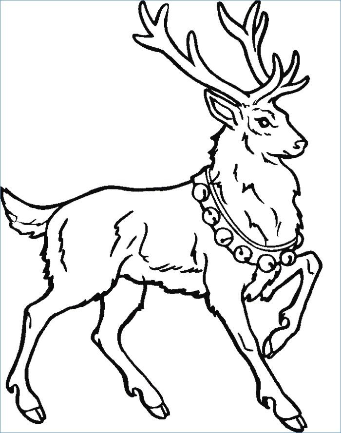 Free Printable Reindeer Coloring Pages at GetDrawings ...