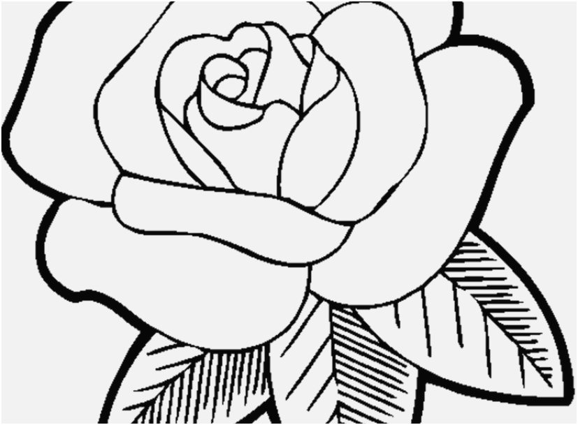 827x609 Rose Coloring Pages Design Free Easy Coloring Pages New Free