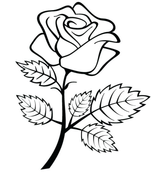 500x594 Rose Coloring Pages Free Coloring Pages Of A On E With Leaf