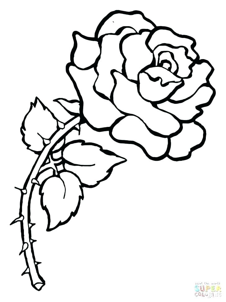 728x971 Rose Coloring Pages Roses Coloring Pages Printable Free Rose