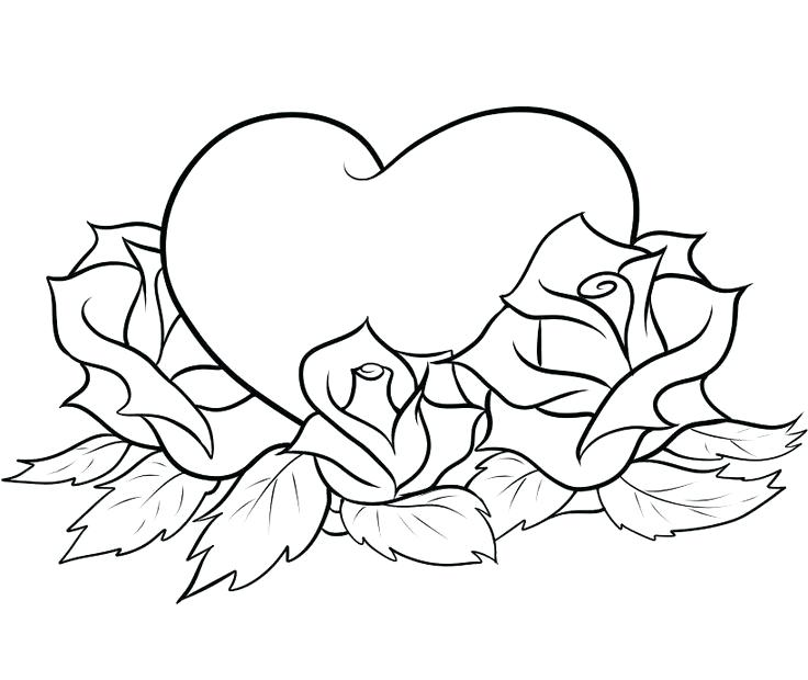 736x620 Special Rose Pictures To Color Free Printable Coloring Pages Roses