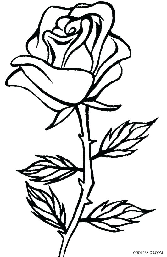 531x820 Roses Coloring Pages Printable