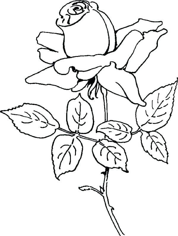 600x796 Compass Rose Coloring Page Rose Coloring Pages Printable S Bouquet
