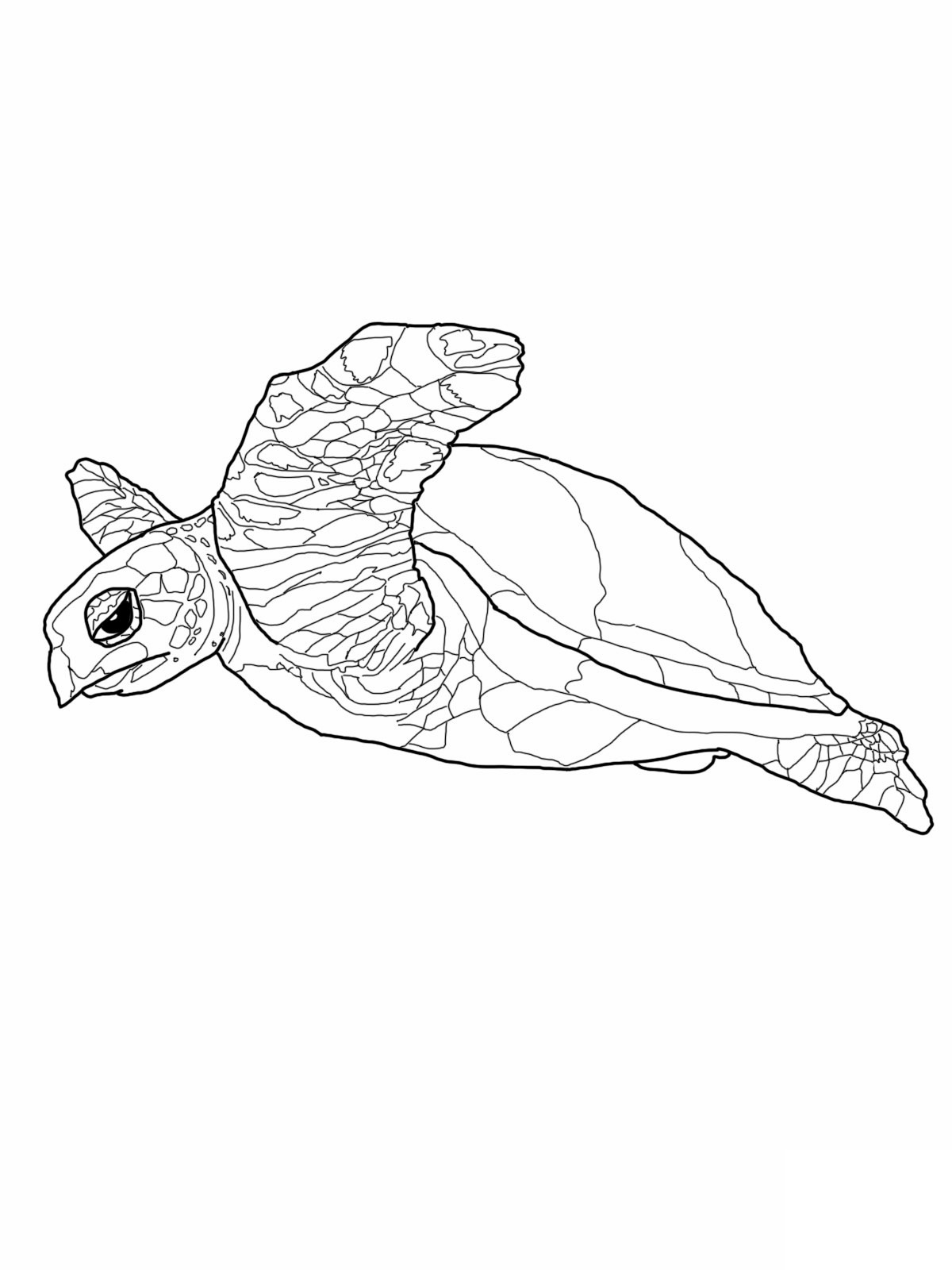Free Printable Sea Turtle Coloring Pages