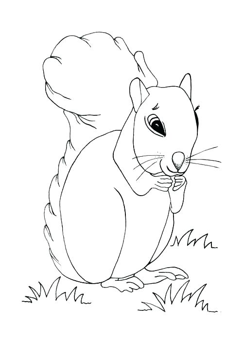 500x707 Squirrel Coloring Page Coloring Page Squirrel Cute Squirrel