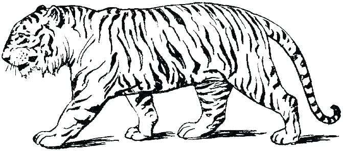 Free Printable Tiger Coloring Pages At Getdrawings Free Download