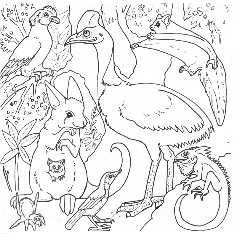 800x800 Free Rainforest Coloring Pages