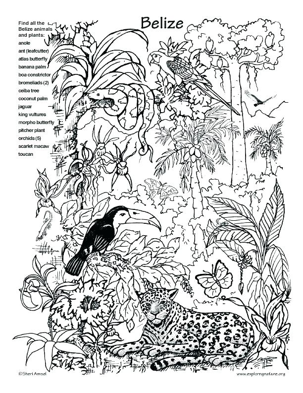 612x792 Plus Coloring Pages To Print Hidden Pictures Coloring Sheets Pages