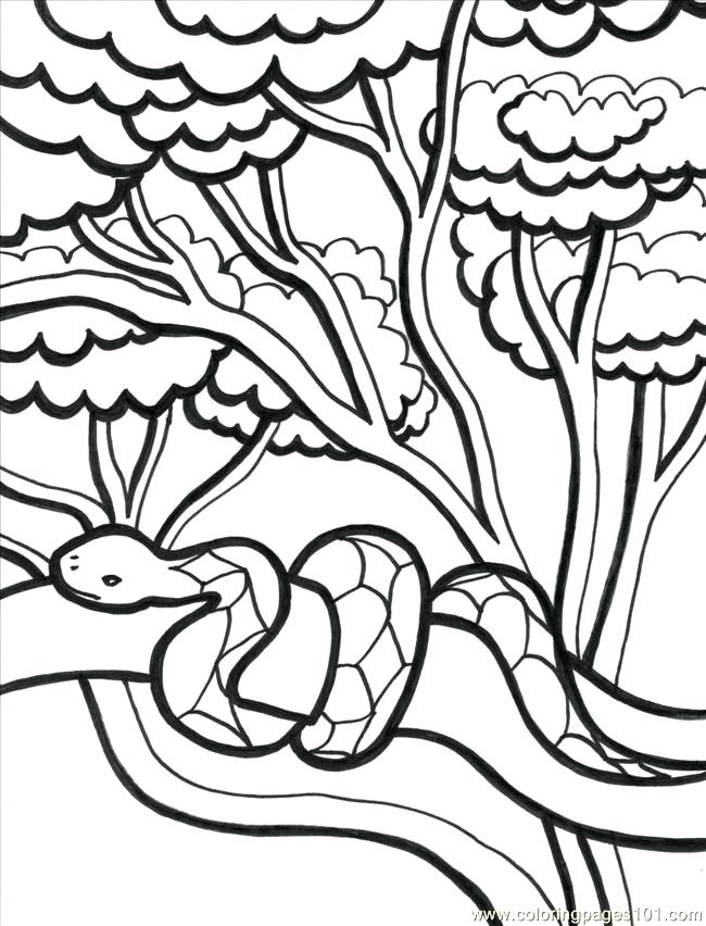 650x852 Awesome Of Tropical Forest Coloring Pages Pictures Coloring