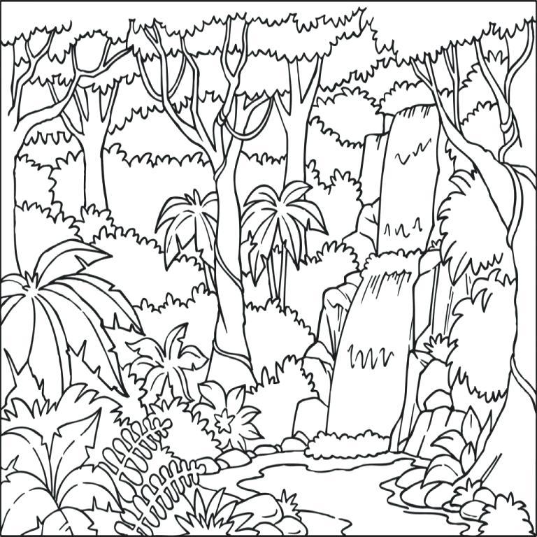 768x768 Rainforest Coloring Pages Tropical Coloring Pages Color Jungle