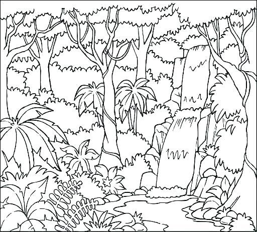512x463 Coloring Page Rainforest Coloring Pages Pdf