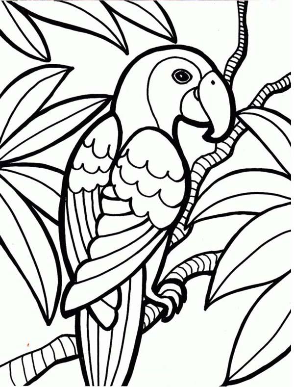 600x789 Rainforest Parrot Coloring Page