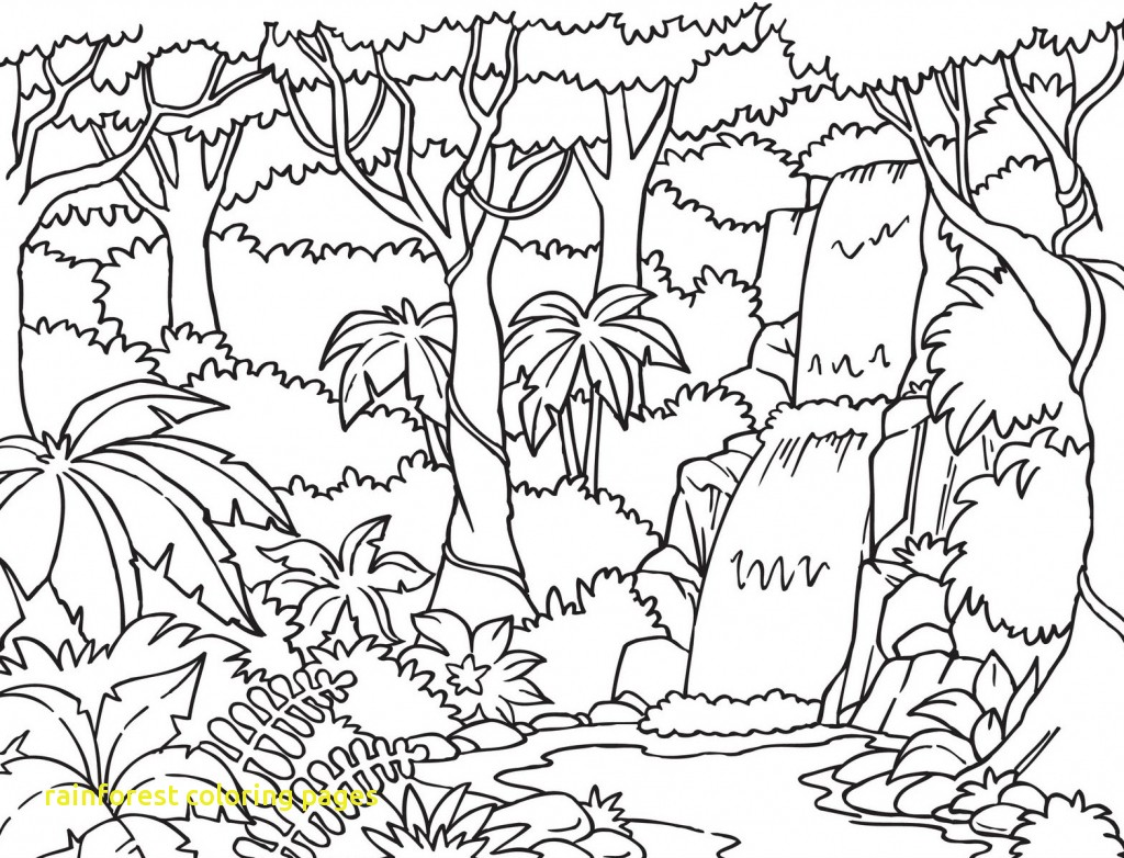 1024x782 Scarce Rainforest Coloring Pages To Print Special Free Printable