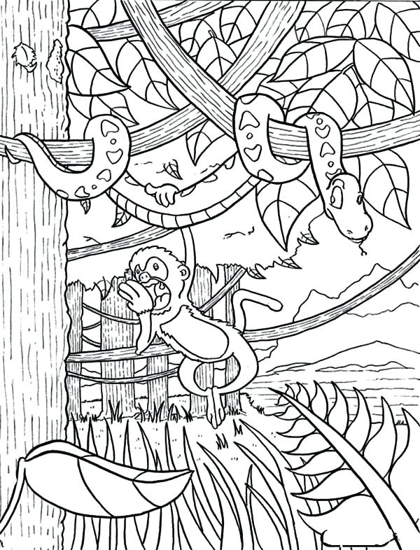 600x786 Tropical Rainforest Coloring Pages Monkey Hanging On Snake