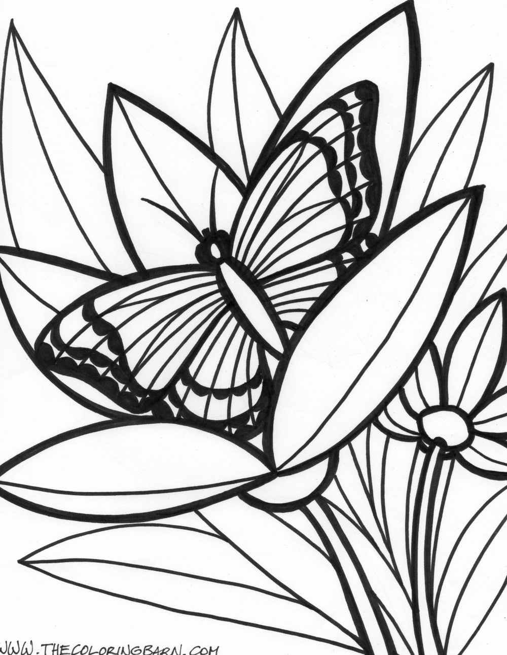 1000x1291 Unusual Tropical Rainforest Coloring Pages Contemporary Free