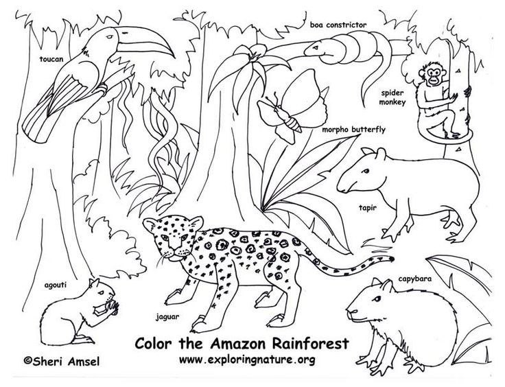 736x564 Welcome To Dover Publications Rain Forest Animals Fun Kit Kids